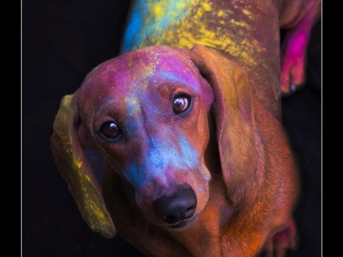 Mostra Colore – Eleonora Azzinnari